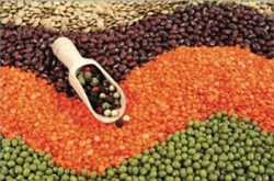 A colourful array of  beans, lentils and split peas, arranged in a wave pattern.