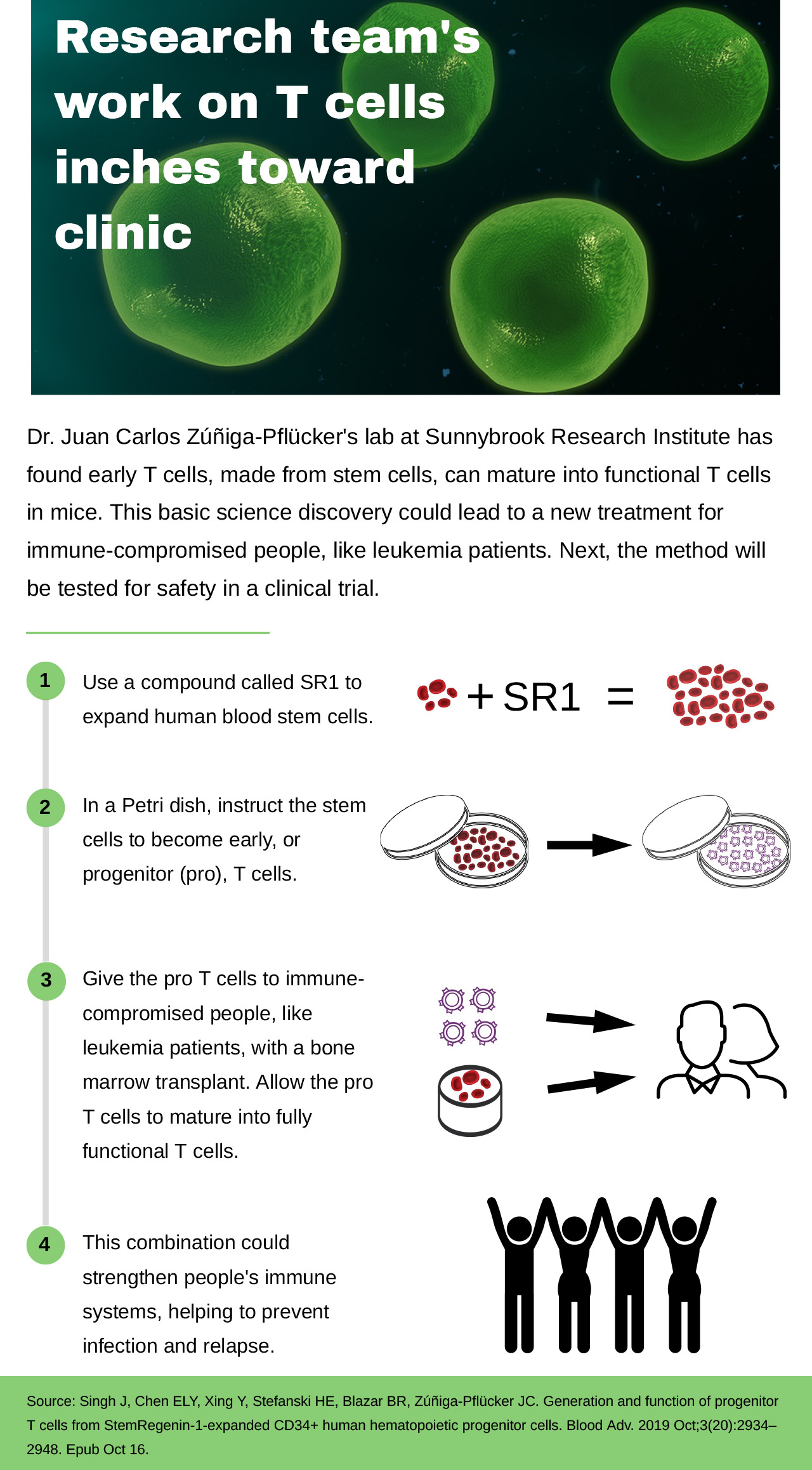 Infographic: Research team's work on T cells inches toward clinic