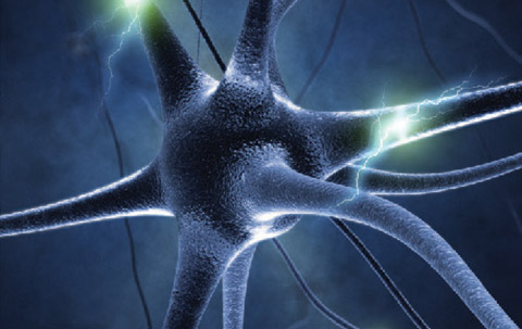 What determines the specific identities of brain cells?