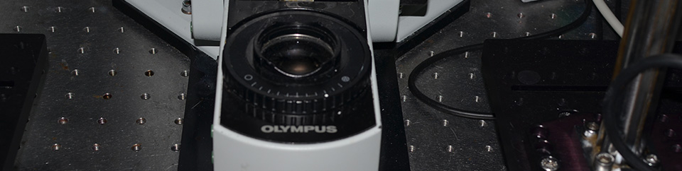 Multiphoton laser scanning microscope