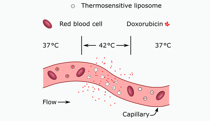 A diagram that illustrates that within a certain temperature range, the chemo drug is released from the thermosensitive liposomes