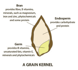 The anatomy of a kernel of grain. On the exterior, there's the bark-like bran layer, which provides fibre, b vitamins, minerals - such as magnesium, iron and zinc, phytochemicals and some protein. On the inside, the bulk of the grain is called the endosperm, and it provides carbohydrate and protein. The inner grain is called the germ, which is very small, and provides b vitamins, unsaturated fats, vitamin e, minerals and phytochemicals.